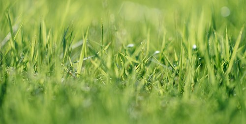 Close up photo of green grass